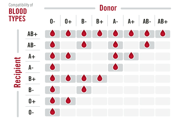 blood group donation chart: Blood types